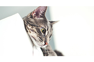 Why Your Cat Meows and What it Might Mean