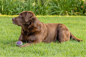 Cancer in Pets - Types, Symptoms & Treatment