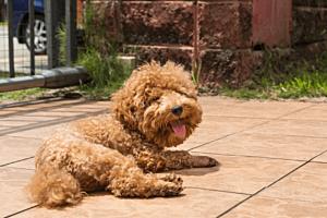 Help! My Dog Has a Hot Spot