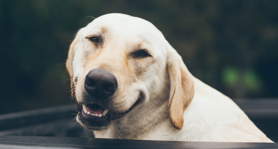 7 Ways You Are Shortening Your Dog's Life