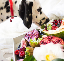 Can I Feed My Dog A Vegan Diet?