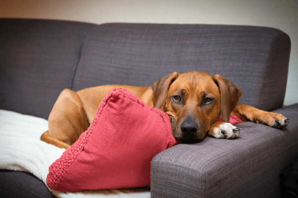 The Ultimate Guide to Worms in Dogs