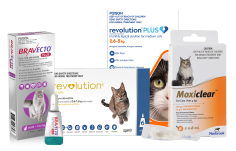Shop Heartworm Products for Cats
