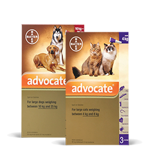 Advocate for dogs & cats