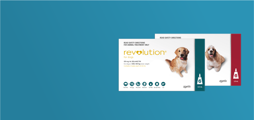 20% Off Revolution Dog 6 packs