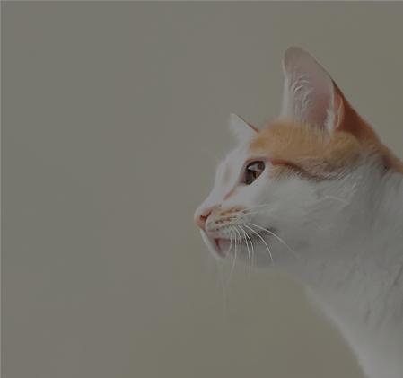 20% Off Revolution cat 6 packs