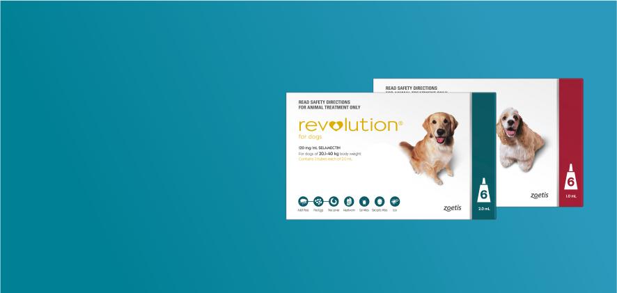 25% Off Revolution Dog 6 packs