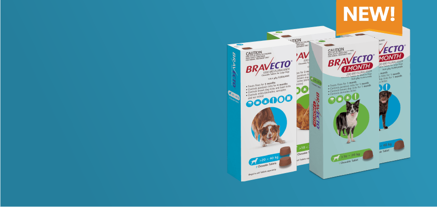 New Bravecto Chews one and two month options