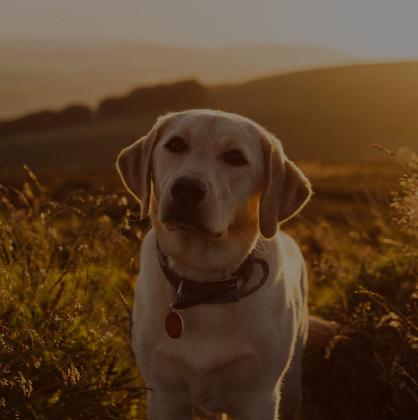 Buy Cheap Pet Supplies Online Vetshopmax
